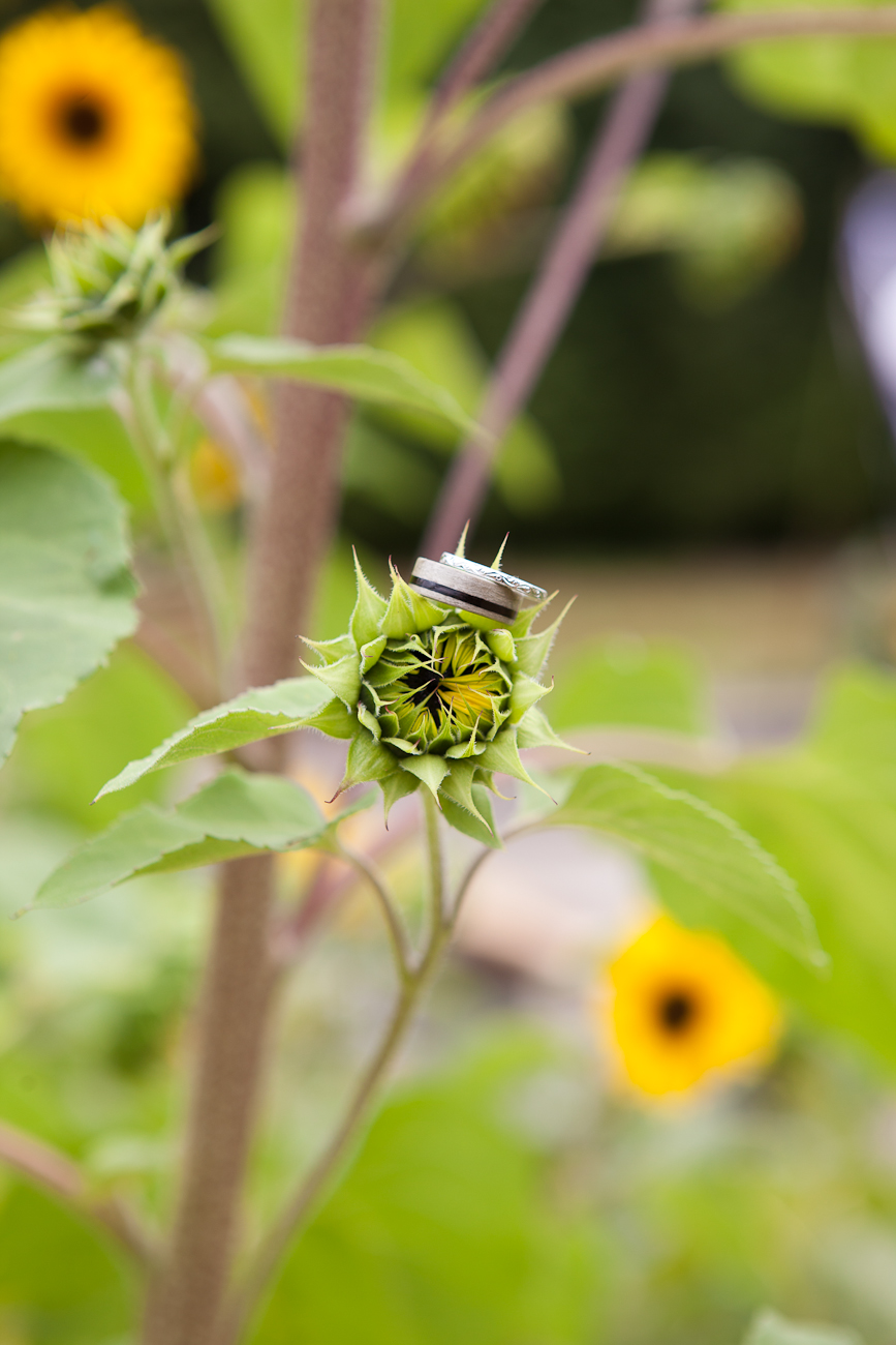 wedding-rings-on-sunflower